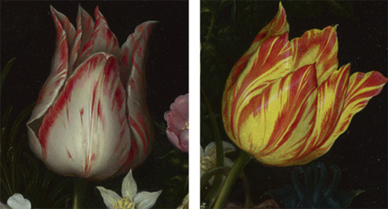 Detail from Ambrosius the Elder Bosschaert, 'Flowers in a Glass Vase', 1609–10 showing tulips 'Semper Augustus' (right) and 'Viceroy' (left)