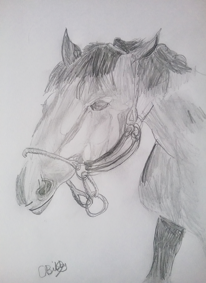 'Whistlejacket' by Charli aged 11