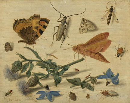 An image of Jan van Kessel the Elder's, 'Butterflies, Moths and Insects with Sprays of Creeping Thistle and Borage', 1654 in the National Gallery, London. A gift from the collection of Willem Baron van Dedem, 2017