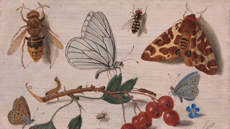 Jan van Kessel the Elder, 'Insects with Common Hawthorn and Forget-Me-Not', 1654