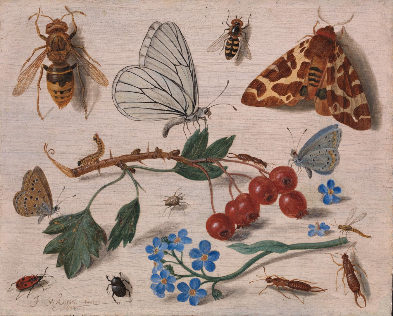 Insects with Common Hawthorn and Forget-Me-Not by Jan van Kessel the Elder