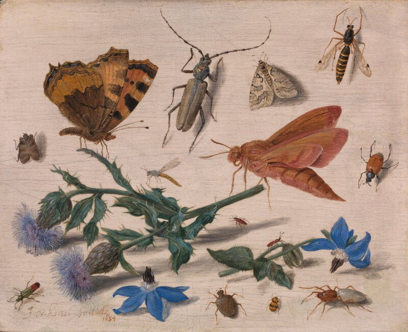 Insects with Creeping Thistle and Borage