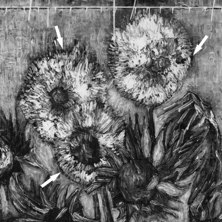 X-ray detail of the Amsterdam Sunflowers showing dark penumbra, where the paint is thin or lacking, around sunflowers kept in 'reserve' in the initial painting process