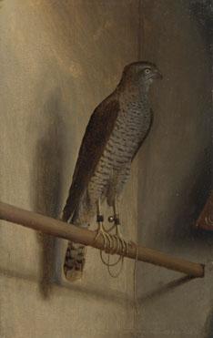 Jacopo de' Barbari: 'A Sparrowhawk'