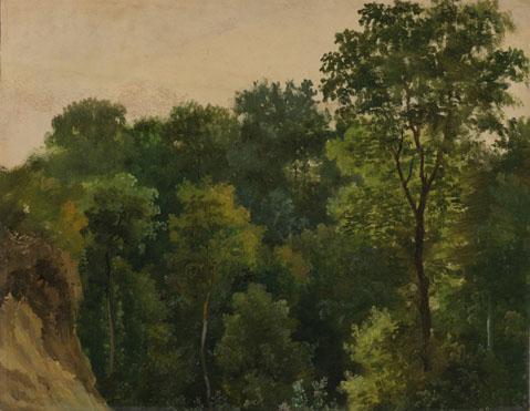 Jean-Michel Cels: 'Tree study'