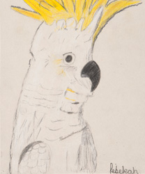 One Child's Picture of a Cockatoo