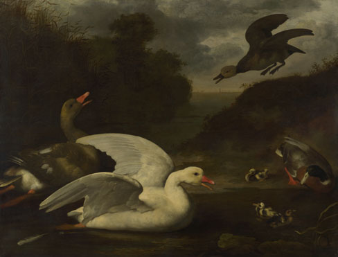 Johannes Spruyt: 'Geese and Ducks'