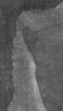 Jan van Eyck: 'Margaret, the Artist's Wife', 1439, detail of X-radiograph