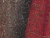 Jan van Eyck: 'Margaret, the Artist's Wife', 1439, photomicrograph of the edge of the fur