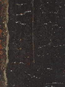 Jan van Eyck, 'Margaret, the Artist's Wife', 1439, photomicrograph showing a brush hair